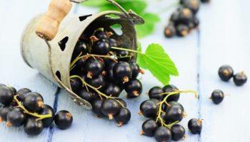 черная смородина калорийность на 100 грамм
