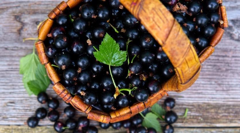 калорийность черной смородины замороженной