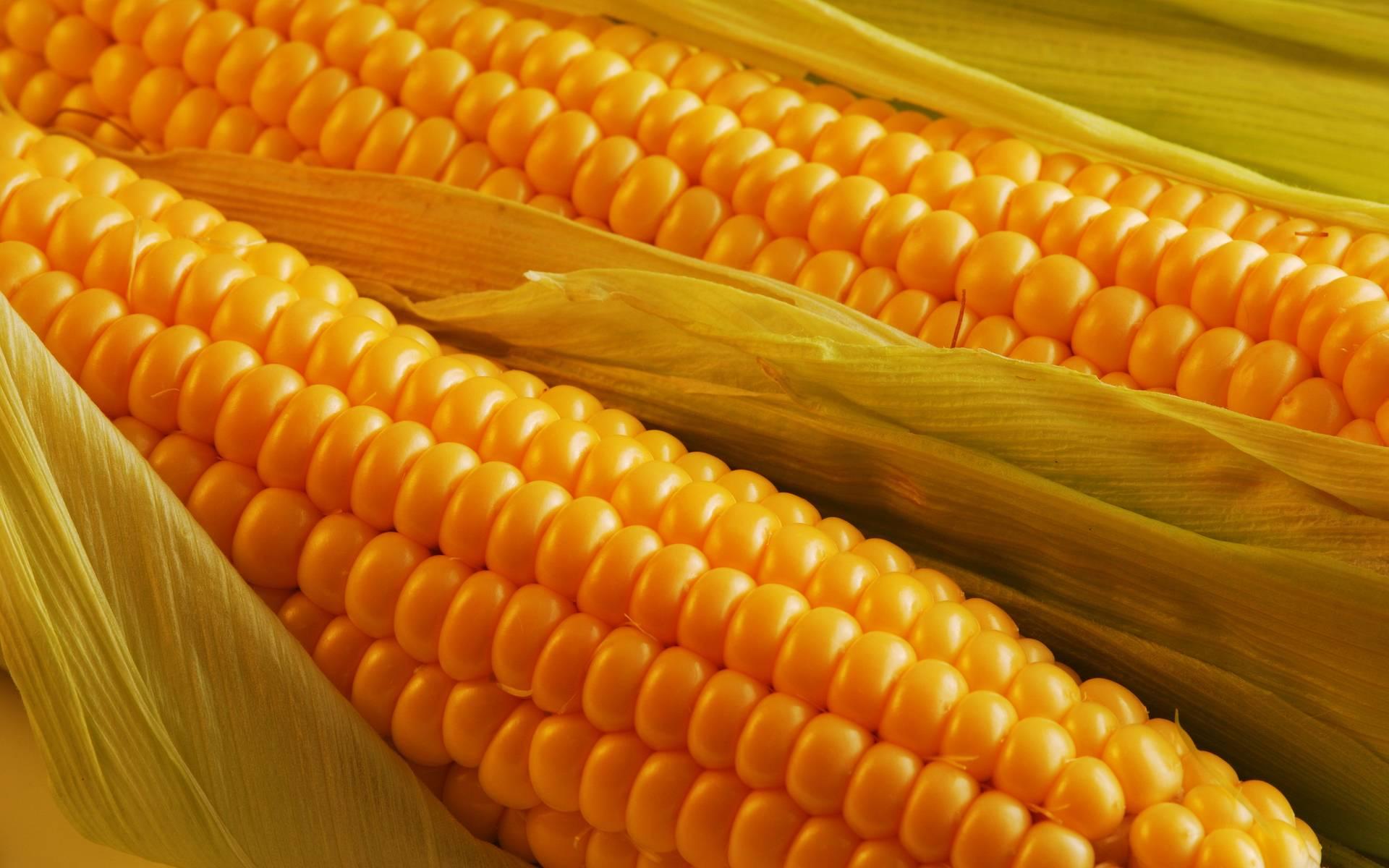 Калорийность вареной кукурузы польза и вред для похудения